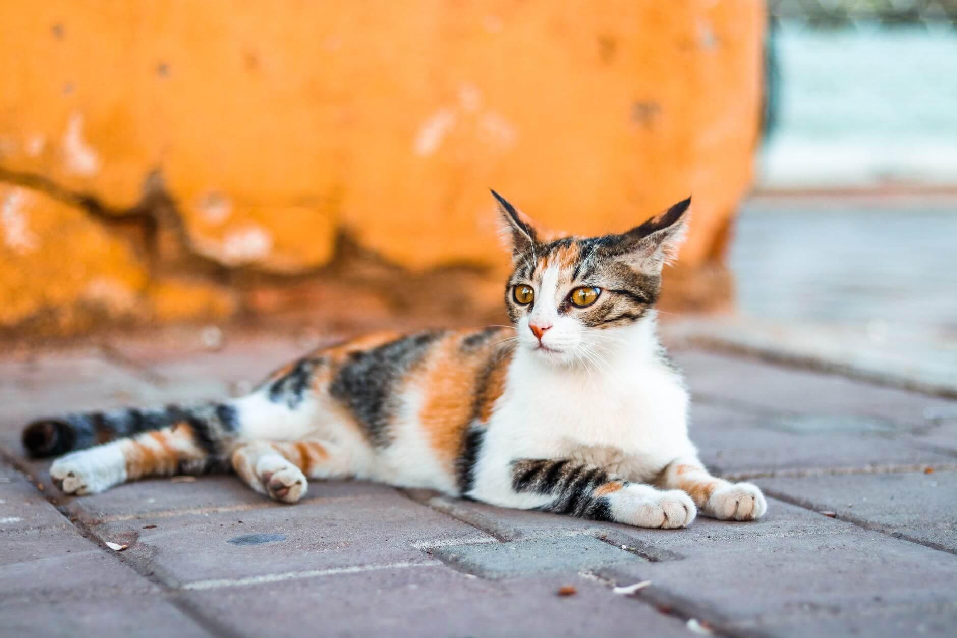 Photo by Hasan Albari on Pexels.com
