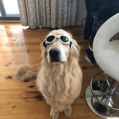 Dog wearing Doggles