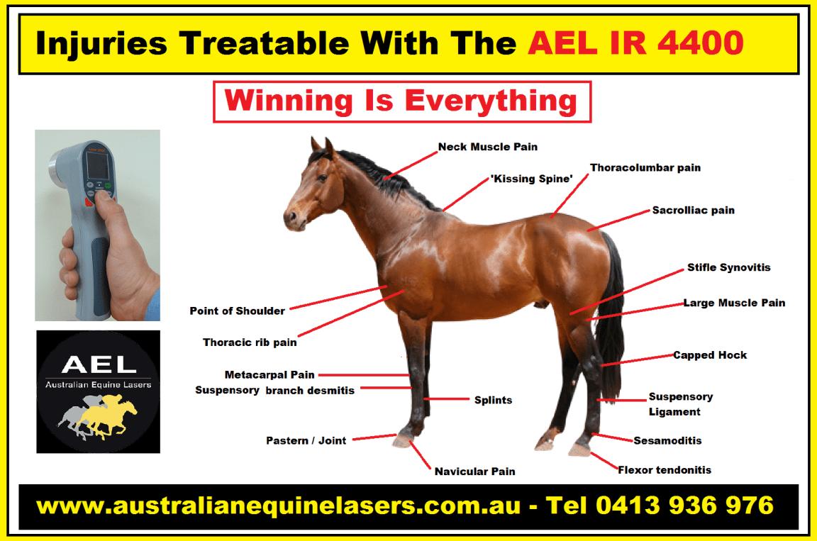 AEL Poster May 2020