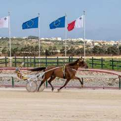 Malta winner
