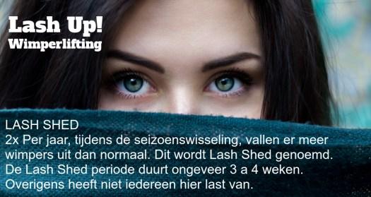 lash shed wimperuitval informatie