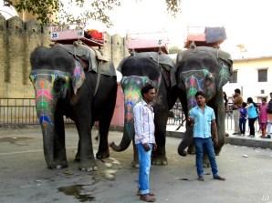 Elephant, Jaipur Pink City