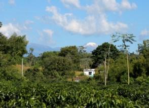 Coffie Filandia, Quindio, Colombia,