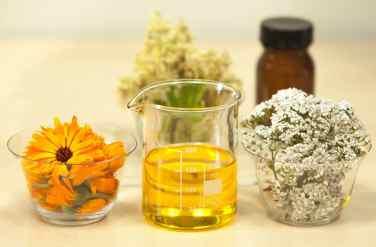 Achillée millefeuille, plante médicinale utilisée par la Sittelle
