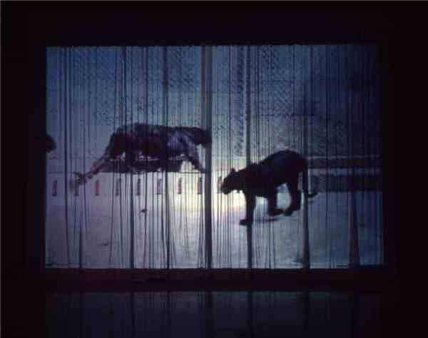Sombras del sueño profundo-1. Paloma Navares