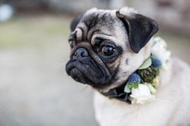 salon-mariage-bretagne-il-etait-une-fois-mariee-chien-blog-mariage-lasoeurdelamariee (5)