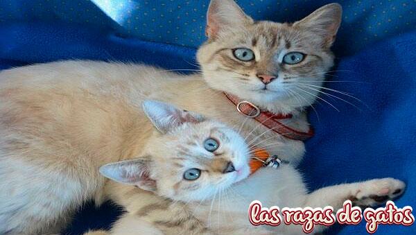 comportamiento gatitos y gatas