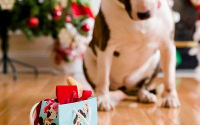 Golosinas caseras para perros con mantequilla de maní