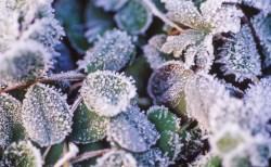 霜降(そうこう)− 二十四節気