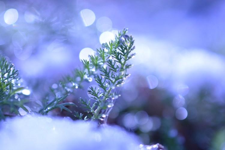 小雪(しょうせつ)− 二十四節気