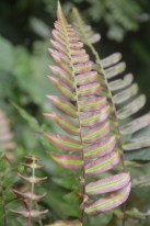 A huge variety of fern species can be easily encountered along this trail
