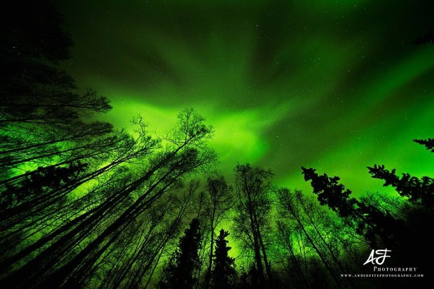 Green Aurora Fairbanks, Alaska Photographer: Amber Fite Web: http://www.amberfitephotography.com/