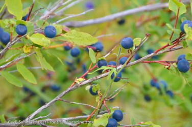 Blueberries www.cecilsandersphotography.com