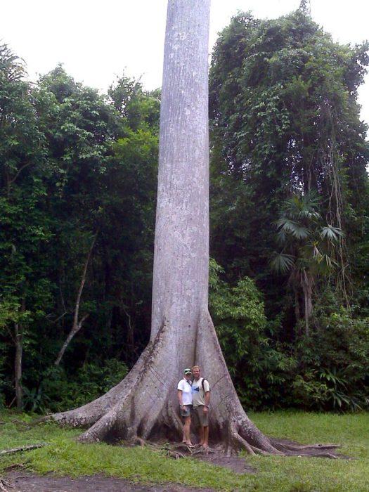 Tikal ceiba roots us