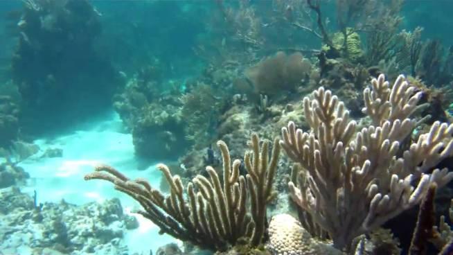 sandy cay snorkeling