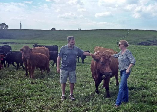 Estherville, IA Petting Cows