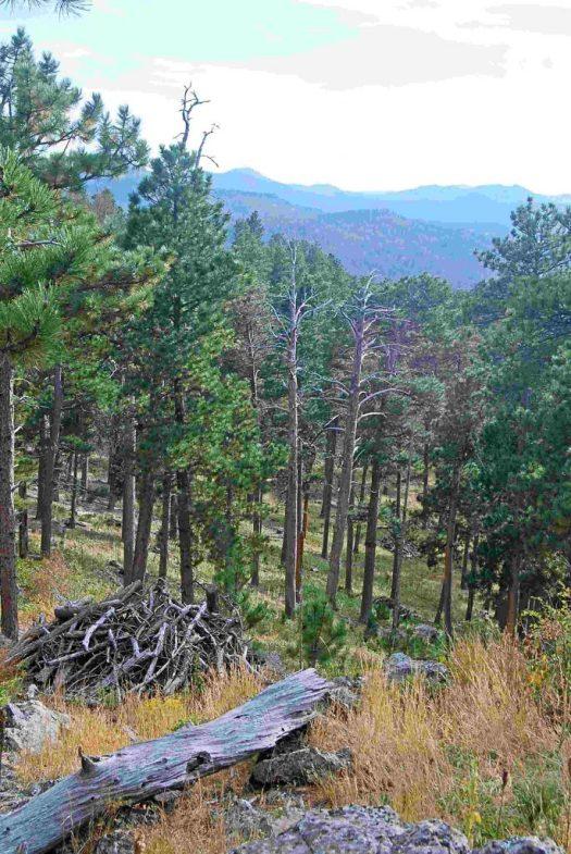 Blackhills Natl Forest, SD 2