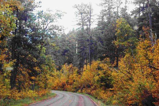 Blackhills Natl Forest, SD FALL