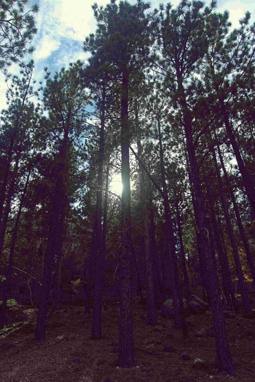 Blackhills Natl Forest, SD