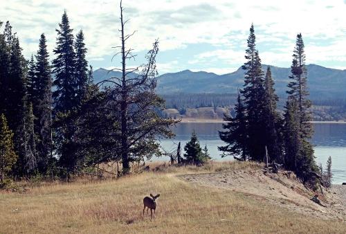 sm_Yellowstone_0354