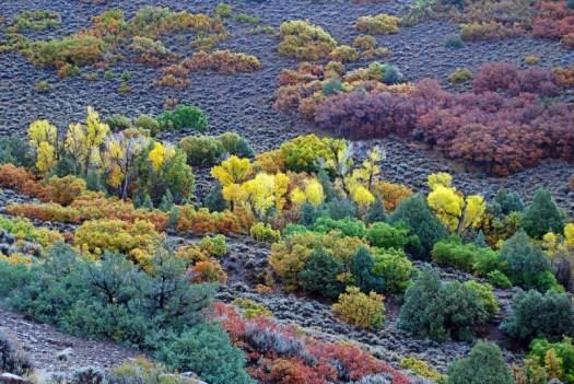 sm_curacanti fall foliage
