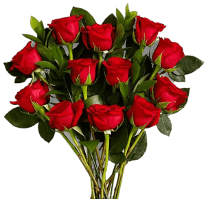 Dozen Gushing Red Rose