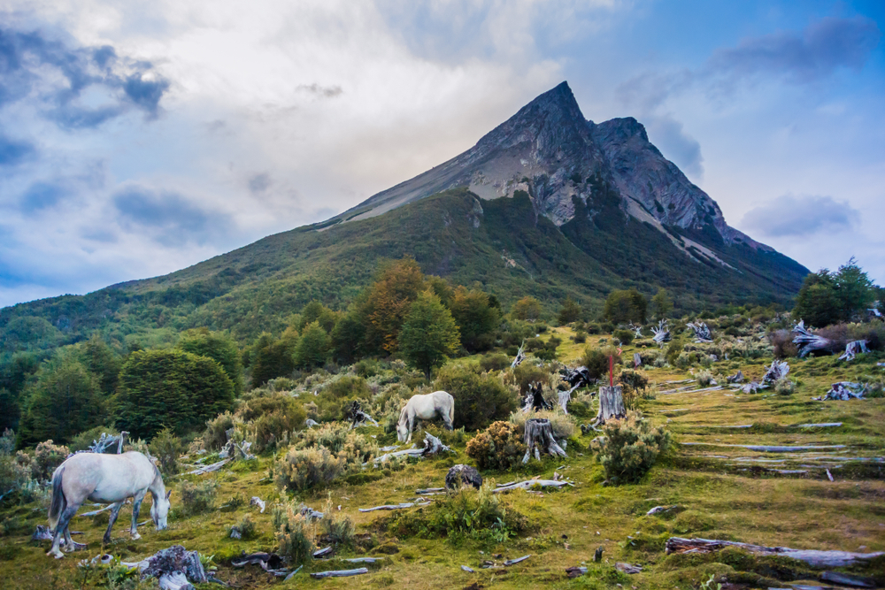 Horses grazing along the mountainside in Ushuaia, Argentina
