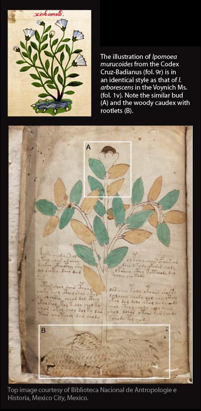 hg100-Voynich1