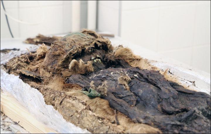 Il bambino - visto qui in queste immagini straordinarie per la prima volta - sembra provenire da un strato sociale superiore dei resti precedentemente dissotterrati nel sito, la misteriosa necropoli Zeleny Yar. (Foto: Museo regionale Yamalo-Nenets e Exhibition Complex)