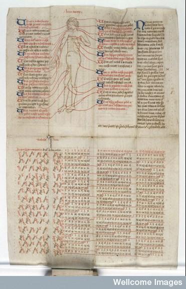 L'uomo Venoso come rappresentato in un altro almanacco pieghevole registrato alla Wellcome Library come MS40, XIV secolo (Foto: Wellcome Library, London)