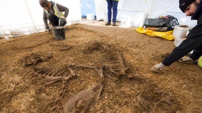 I due scheletri di cavallo (Foto: DAVID WILSON HOMES)