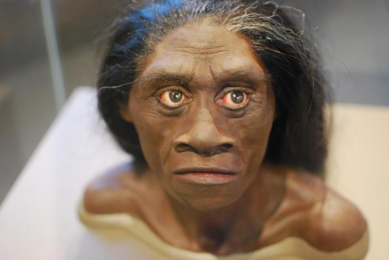 "Ricostruzione dell'Homo floresiensis.Gli esseri umani moderni avrebbero vissuto accanto alla specie ""hobbit"" (Foto: KAREN NEOH / FLICKR)"