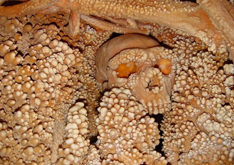 Cranio del famoso uomo di Altamura in situ