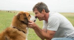 """книги про собак, книга""""Жизнь и цель собаки"""""""