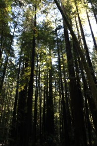 armstrong-redwood-grove-dec-2016-70