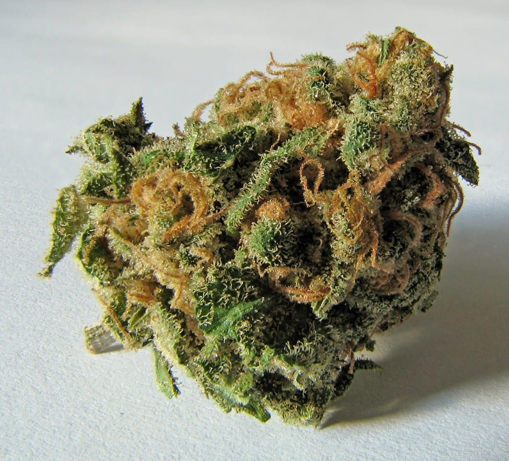 marijuana terpenes