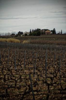 Clos-valdet-vignes-hiver