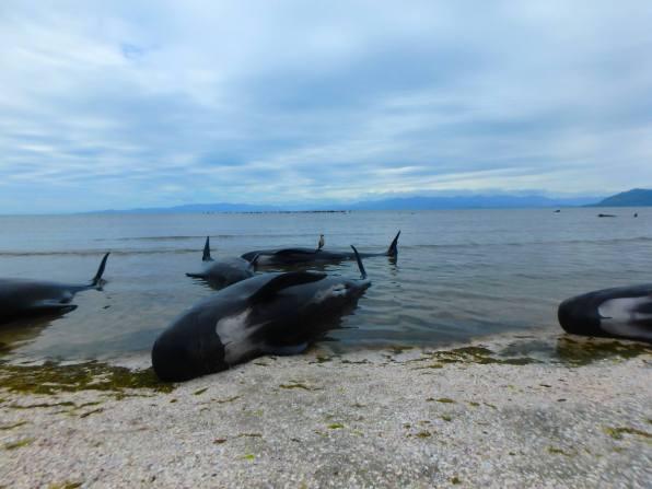 baleines-de-nouvelle-Zelande-01