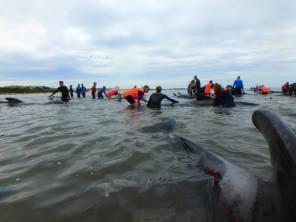 baleines-de-nouvelle-Zelande-04