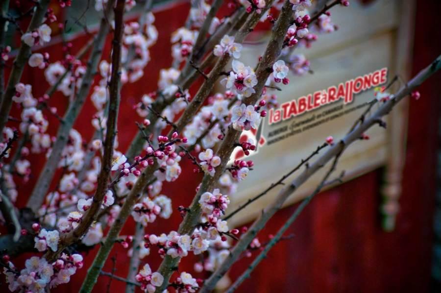 L'enseigne de LA TABLE à RALLONGE en CAMARGUE au printemps