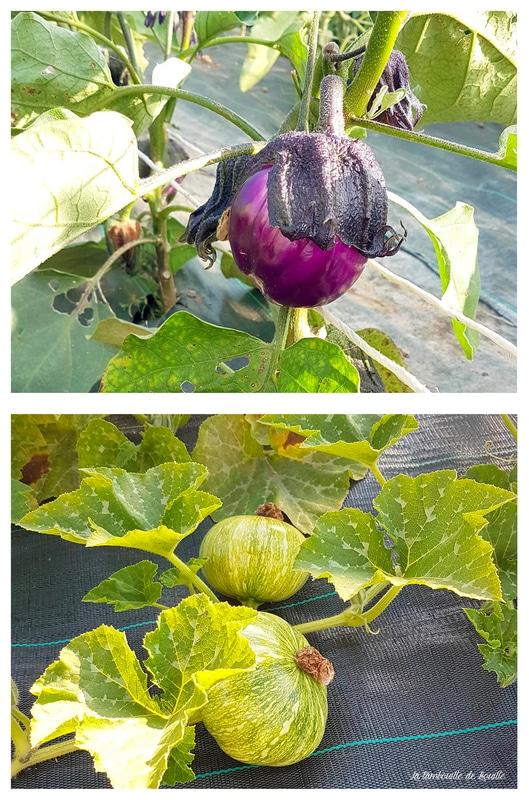 legumes-coteaux-nantais-biodynamie-loire-atlantique