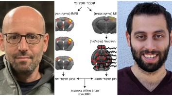 función cerebral