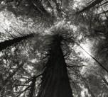 Beth Moon - King's Canyon Sequoias, USA