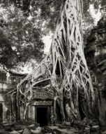 Beth Moon - The Strangler Fig, Amazonia