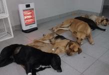 castraciones-felinas-y-caninas:-informacion-para-quienes-tienen-turno-en-diciembre