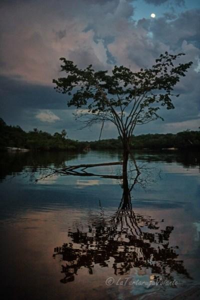 Brasile Amazzonia e Lencois Maranhenses albero sul rio negro