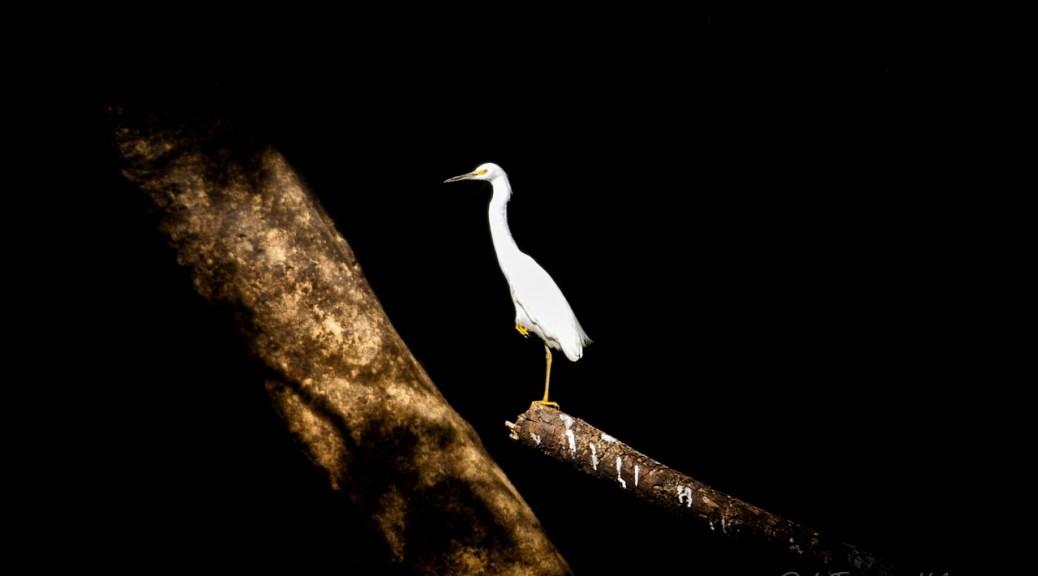 Dove dormire, Brasile Amazzonia e Lencois Maranhenses uccello