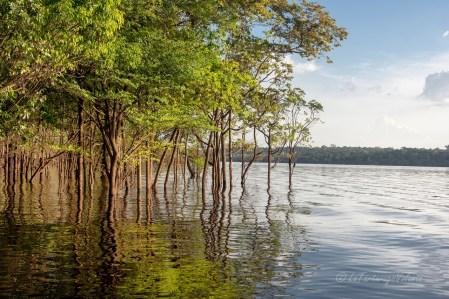Viaggio in Brasile, Amazzonia lungo il rio Negro