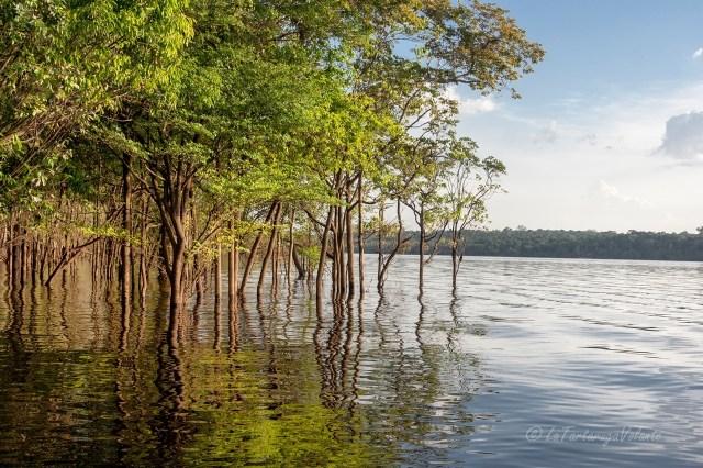 Brasile Amazzonia lungo il rio Negro