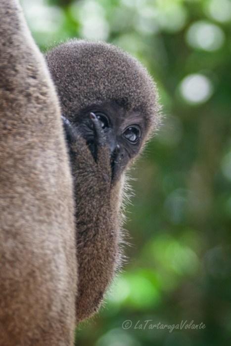 Viaggio in Brasile, Foresta Amazzonica,Brasile Amazzonia piccolo di scimmia